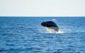 Things to Remember When Going Whale Watching